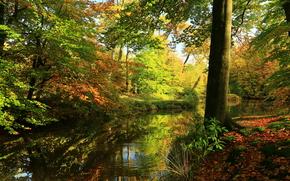 automne, petite rivière, arbres, paysage
