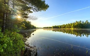 川, 木, 風景