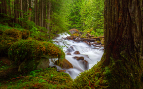 forest, trees, river, stones, moss, course, nature
