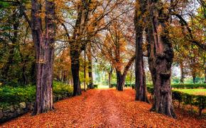 parco, autunno, alberi, stradale, paesaggio