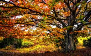 autunno, alberi, natura