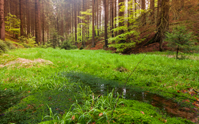 forest, trees, swamp, nature