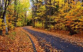stradale, autunno, alberi, foresta, natura, paesaggio