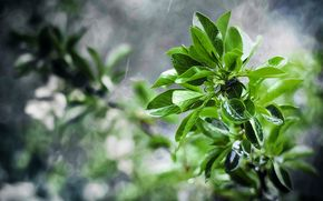 ветка, листья, макро