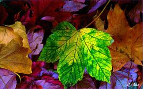 秋, 叶子, 性质, JC-话筒