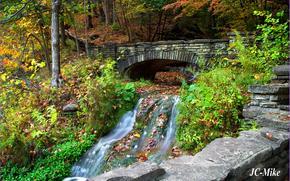 autunno, foresta, alberi, piccolo fiume, torrente, ponte, natura, jc-mike