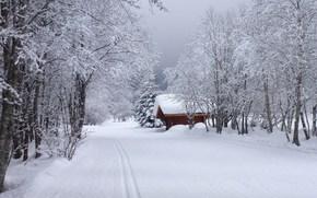 зима, дорога, домик, деревья, пейзаж