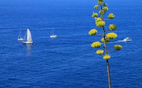 mare, navi, barche a vela, albero, paesaggio