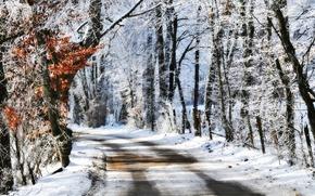 дорога, деревья, снег, лес, пейзаж