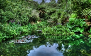 pond, trees, forest, plants, jungle