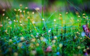 moss, grass, Macro