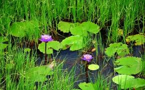 водоём, трава, растения, цветы, природа