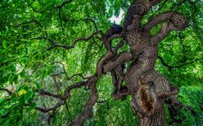 arbre vert, BRANCH, feuillage, nature