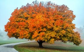 autunno, stradale, albero, nebbia
