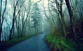 森, 道路, 木, 霧, 風景