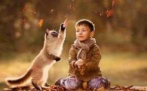 кот, мальчик, листья, осень