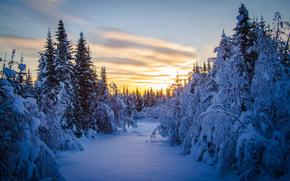 日落, 冬天, 树, 森林, 景观