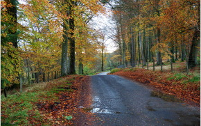 stradale, alberi, foresta, paesaggio, autunno