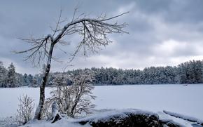 冬天, 森林, 树, 场, 景观