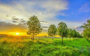 zachód słońca, pole, droga, drzew, krajobraz