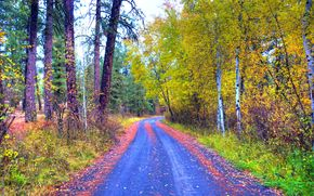 autumn, road, trees, nature, landscape