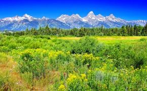 Yellostone, 山脈, フィールド, 木, 風景