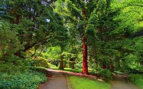 parco, stradale, alberi, paesaggio