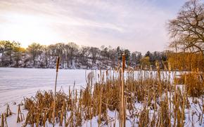 inverno, fiume, puntellare, alberi, nevicata, canna, paesaggio