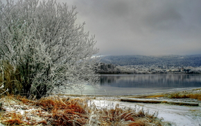 lake, shore, trees, frost, fog, landscape