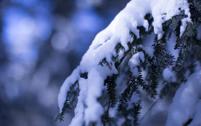 ramo, inverno, nevicata, abete rosso, aghi, Macro