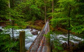 河, 森林, 树, 桥, 性质