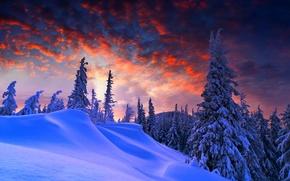 зима, деревья, закат, пейзаж