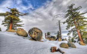 冬天, 树, 石头, 景观