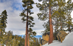 太浩湖, 加州, 内华达州, 树, 石头, 冬天