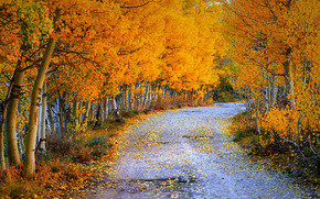 дорога, осень, деревья, пейзаж