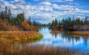 lago, autunno, alberi, paesaggio