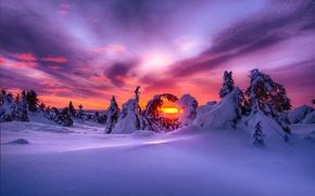 paesaggio, natura, inverno, nevicata, cielo, nuvole, mattinata, DAWN, sole