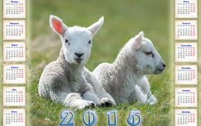 calendario, 2015, Anno della Pecora
