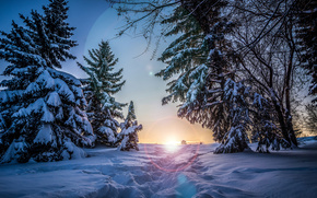 зима, деревья, солнце, снег, закат, ели, пейзаж