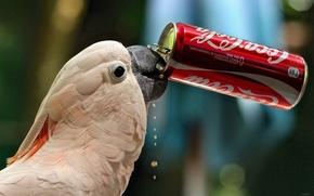 Cockatoo, parrot, Coca-Cola, THIRST, BANK