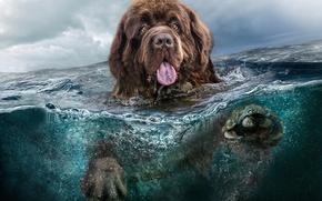 cane, acqua, mare, nuvole