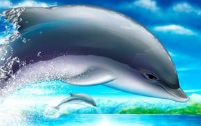 delfin, rysunek