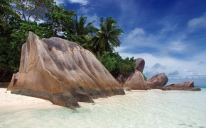 stones, coast, palm, tropics