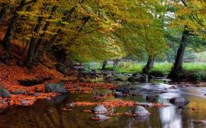 речка, осень, камни, деревья, природа