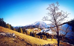 Montagne, autunno, alberi, paesaggio