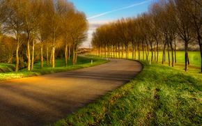 droga, drzew, pole, krajobraz
