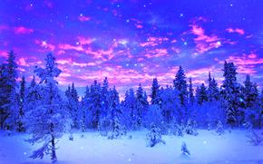 invierno, árboles, nieve