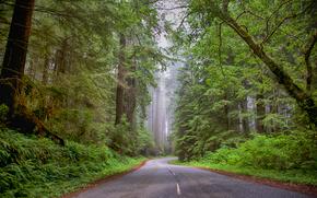 carretera, bosque, árboles, niebla, paisaje