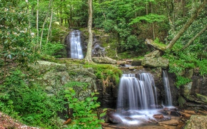 forest, trees, small river, waterfalls, Rocks, stones, nature