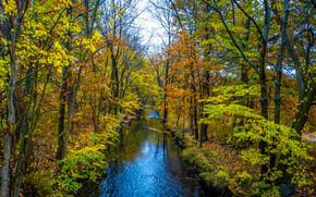 autunno, foresta, alberi, piccolo fiume, natura
